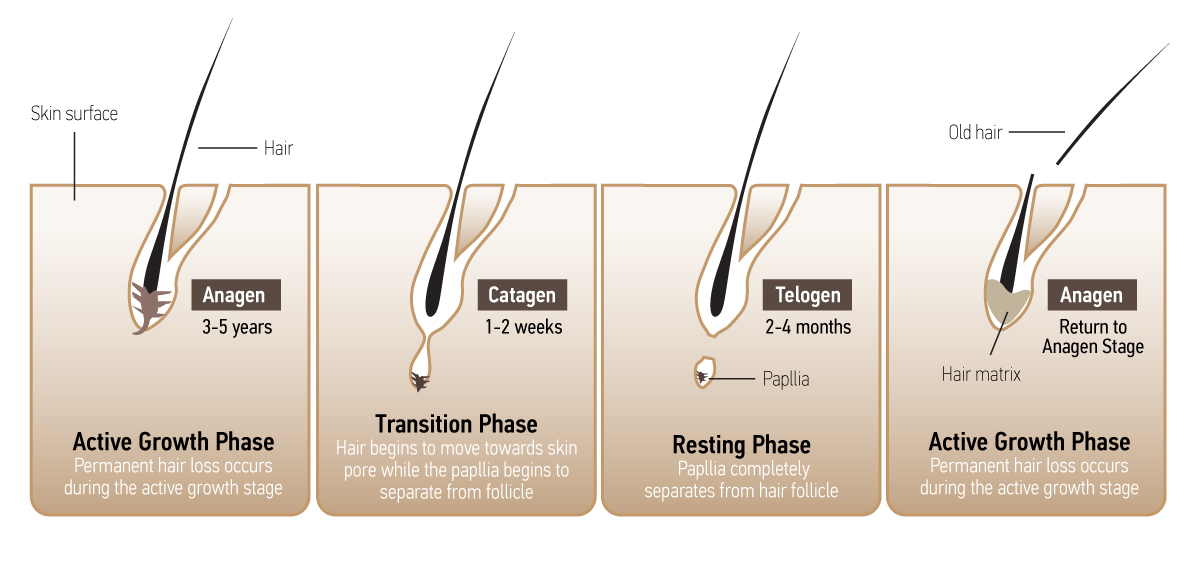 hair drug testing phases